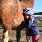Pferdeflüster Einsteigerkurs