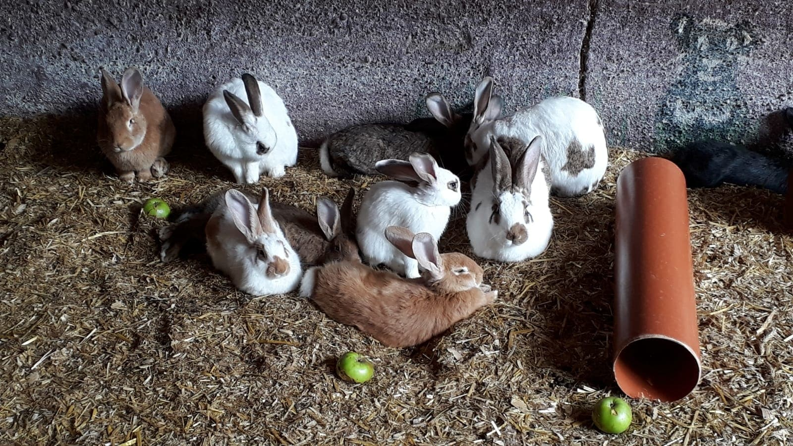 Familotel Gut Landegge Kleintiere Hasen Familienurlaub im Emsland