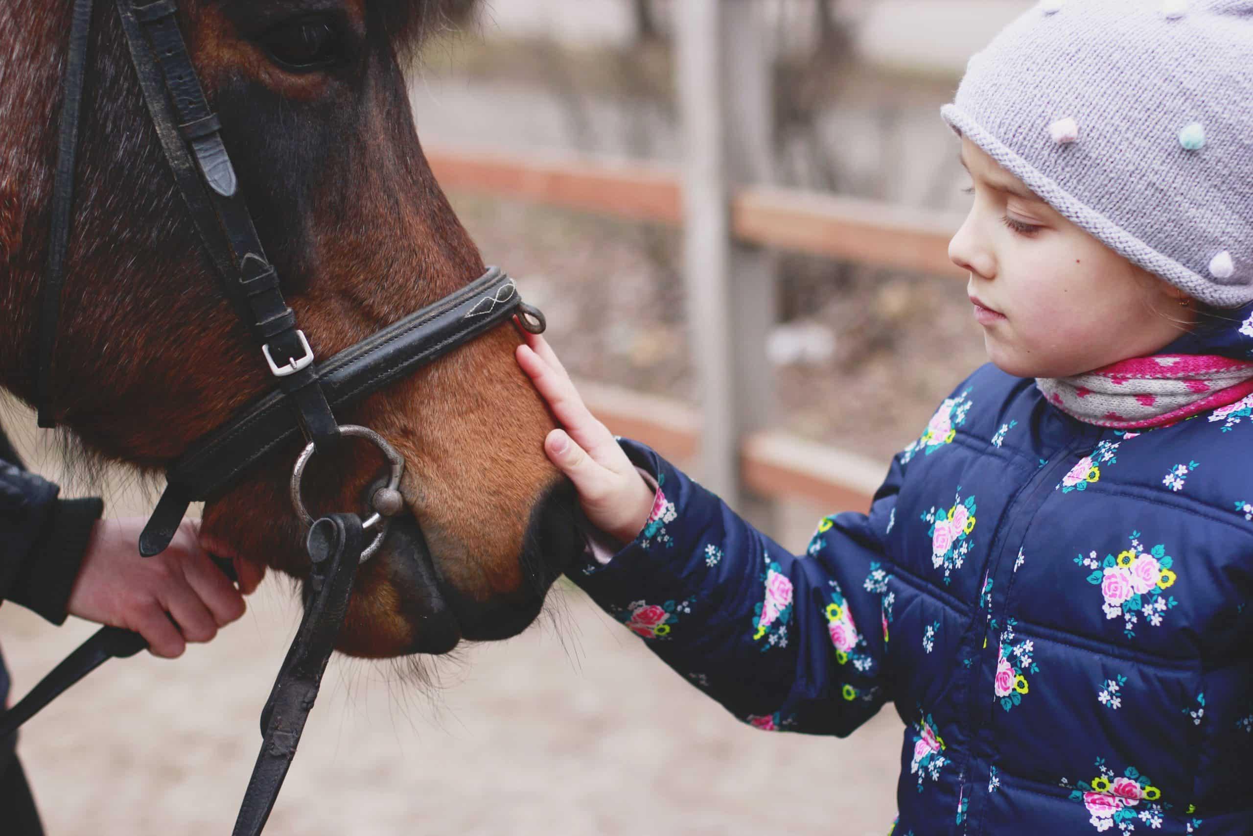 Gut Landegge Familotel Emsland Familienurlaub Reiterhof Reitanlage Reithalle Gut Pferde Urlaub mit Pferden Pferdeflüsterer