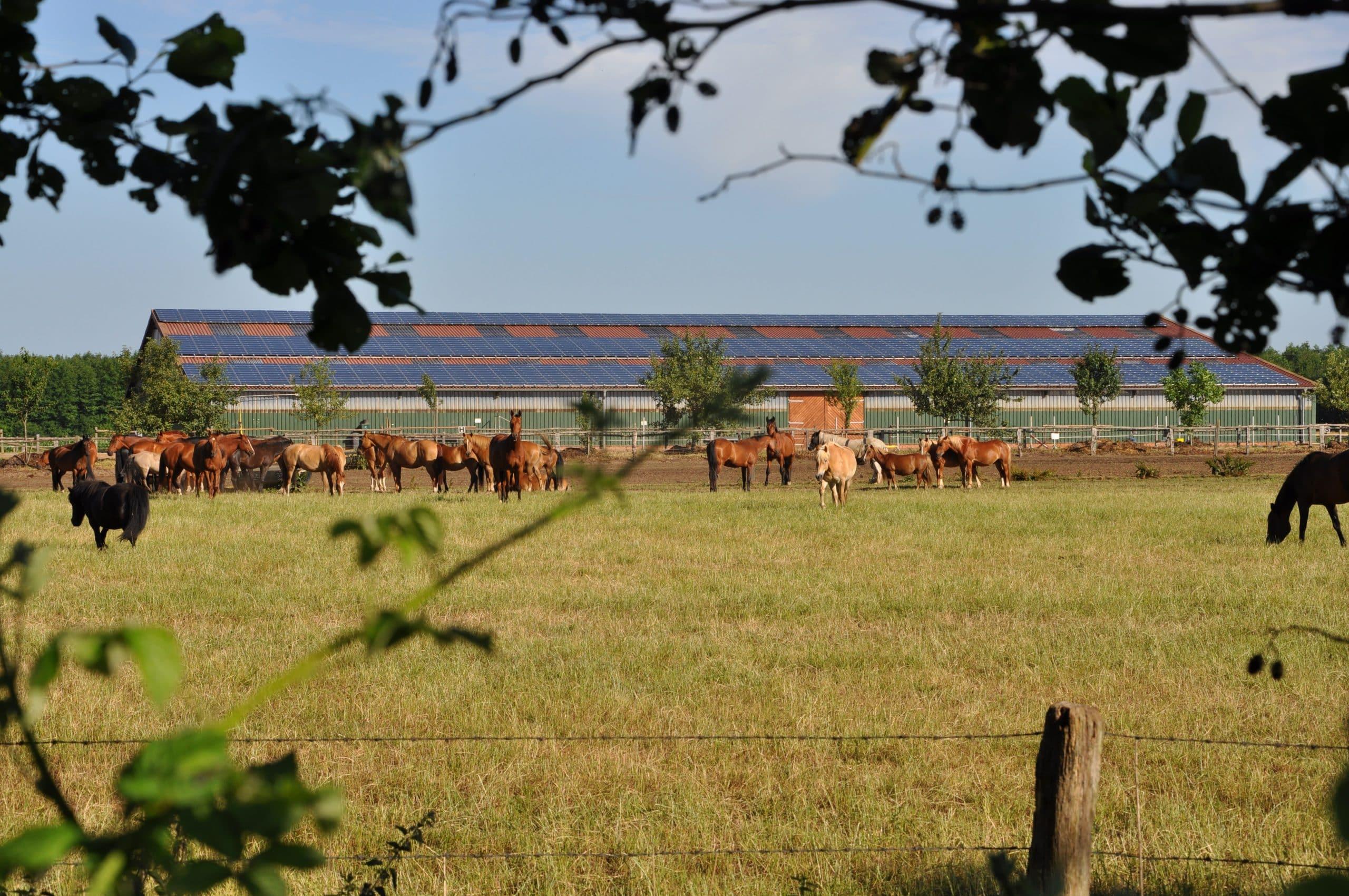 Familienurlaub Reiturlaub Familotel Gut Landegge Emsland Pferdekoppel