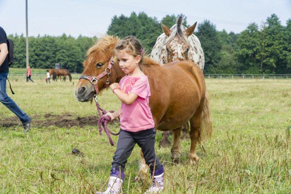 Gut Landegge Familotel Emsland Familienurlaub Reiterhof Reitanlage Reithalle Gut Pferde Urlaub mit Pferden