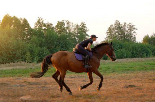 Gut Landegge Familotel Emsland Familienurlaub Reiterhof Reitanlage Reithalle Gut Pferde Urlaub mit Pferden Galopp
